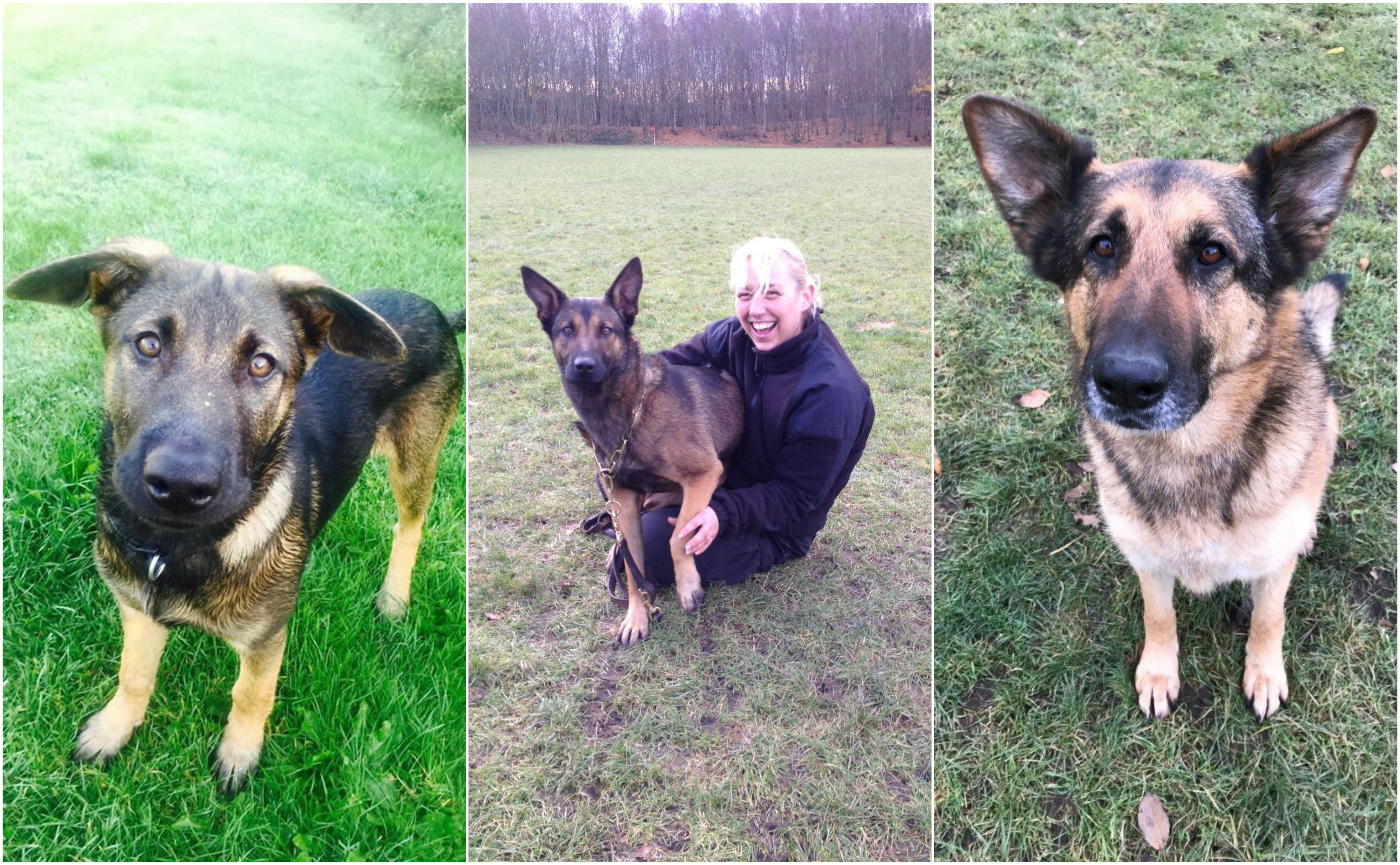 Police dogs Quinn and Inca