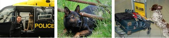 Pictures of Police dogs